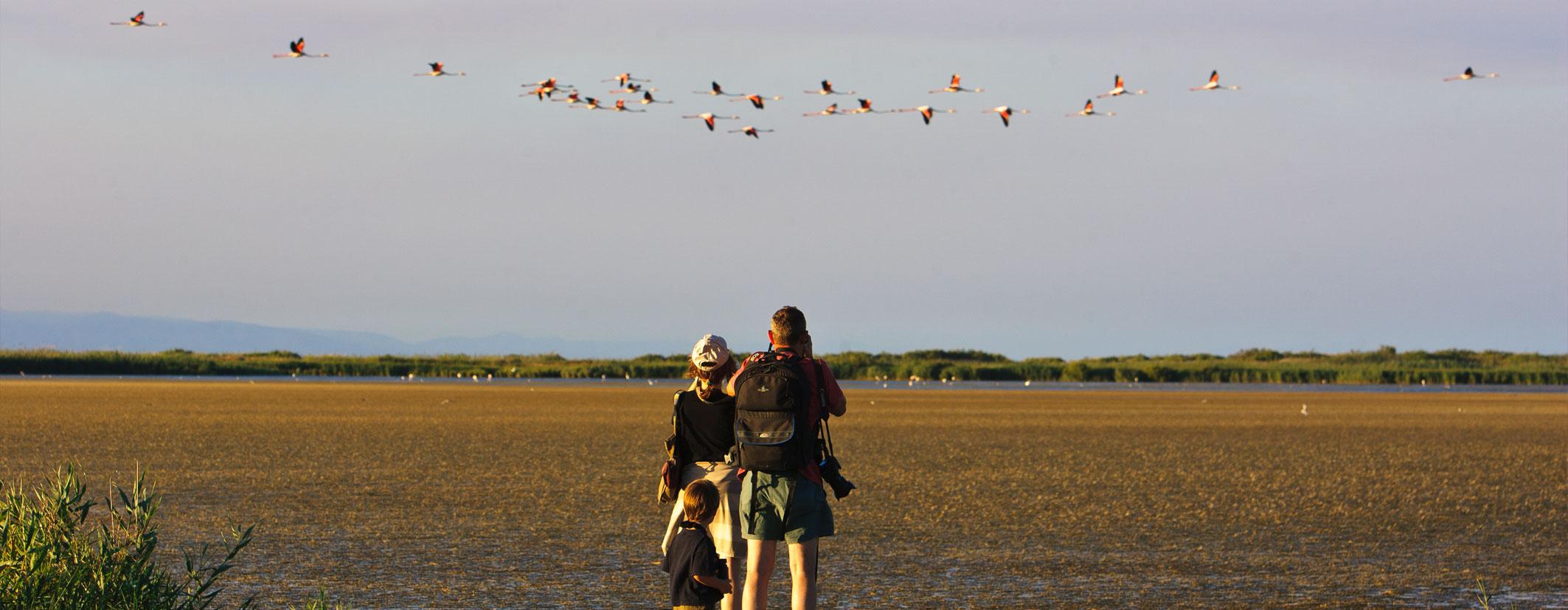 Birdwatching Delta de l'Ebre