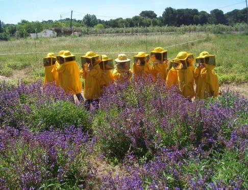 salvia florida i nens apicultors