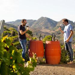 Bodegas y rutas del vino